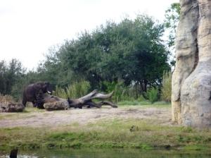Elefant på Safari, altså vi er på safari å ser den.. :D