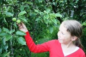 Hadde vært litt godt med eple..synd det bare e kart enda..