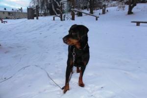 Fikk gleden av å være hundevakt i 2 uke vi... Søteste Zorba!