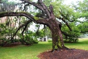 Et diiigert tre utafor Orlando Science Center (så ska du dit, ser du det treet her e du framme)
