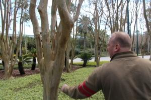 Merkelige trær uten bark!