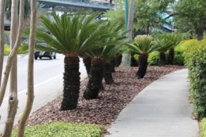 Små palmer!