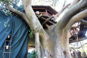 Et ganske stort trehus...Swiss family treehouse.