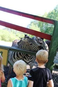 Og noen Zebraer.