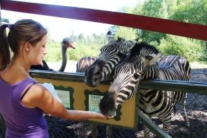 Lene mater også Zebraene. Og en Struts som prøver seg..