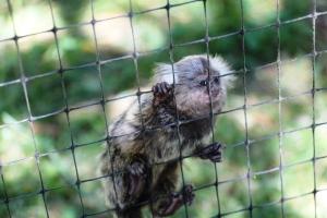Så søt og liten ape...