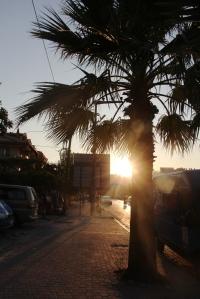 Palme og solnedgang...