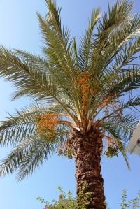 Obligatorisk palmebilde!