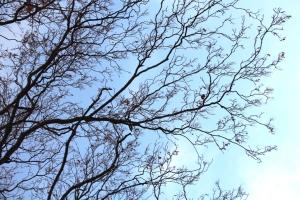 Blå blå himmel der oppe! :D