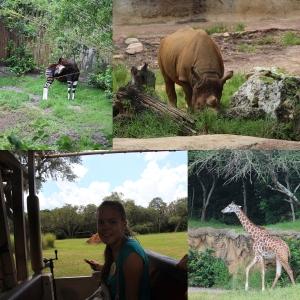 Vi var også på Killimanjaro Safaris. Her så vi sjiraffer, elefanter, okapi og nesehorn blant annet...