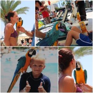 Møtte på en slik papegøye!
