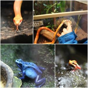Flere små kryp, giftige frosker blant annet.
